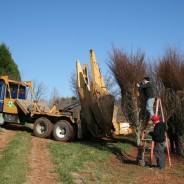 Tree Spades at Work – Big John Tree Move