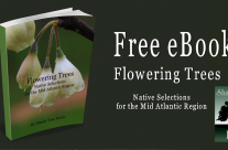 Free eBook – Flowering Trees Native Selections