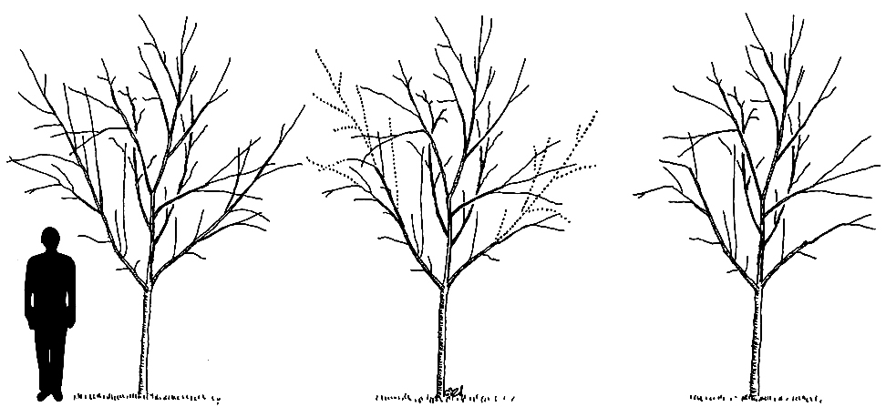 how to draw a big tree with branches