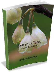 Flowering Tree eBook Cover