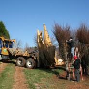 Tree Spades at Work – Big John Tree Move
