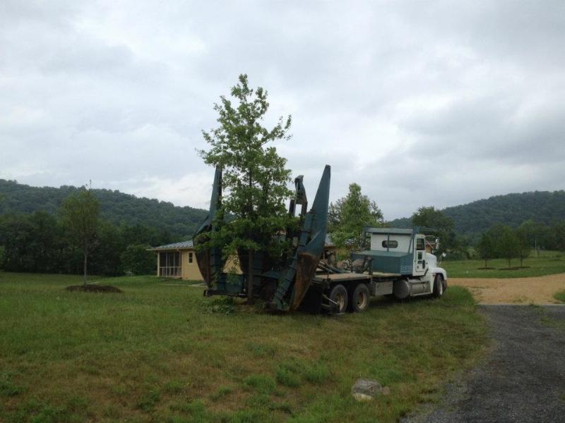 Tree Spade 6