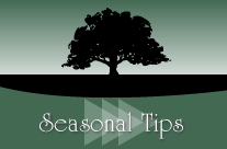 Seasonal Tips (Summer) – Trees are Nature's Air Conditioners