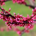 App red flower bud